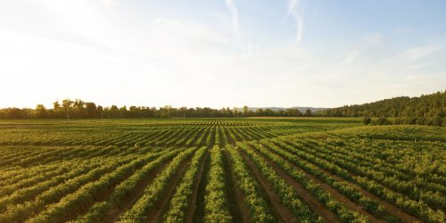 agriculture workers compensation