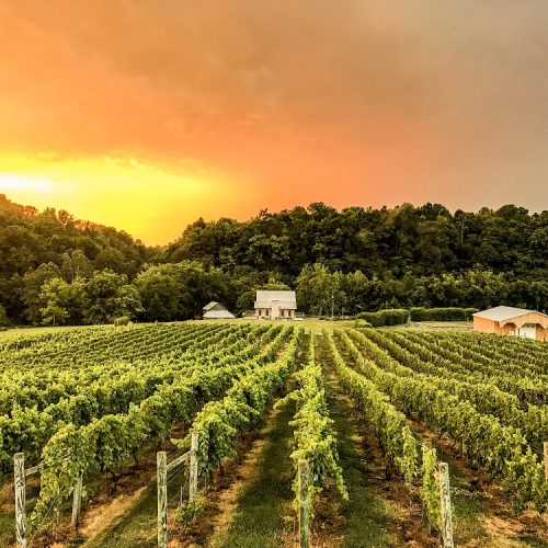 Winery vineyard workers compensation
