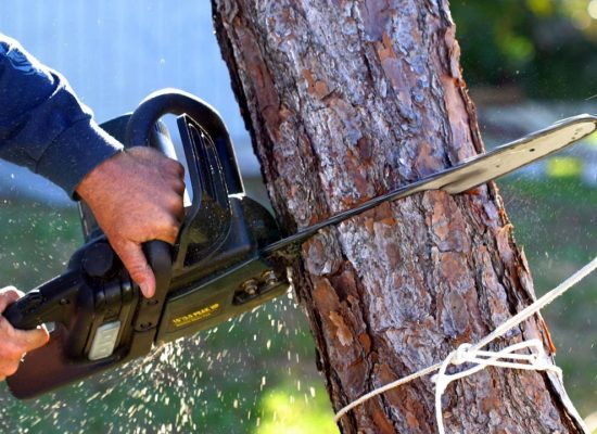 Tree removal workers compensation insurance
